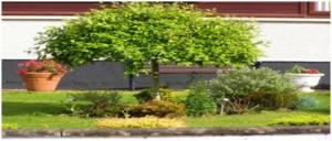 Encuentra tu árbol de jardín
