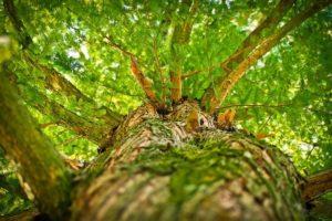 Especialistas en talas de árboles en Alicante