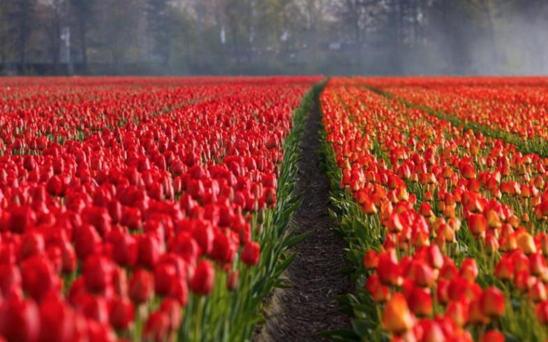 Porque los jardineros y agricultores remueven la tierra