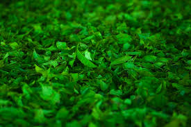 Te verde Medicinal