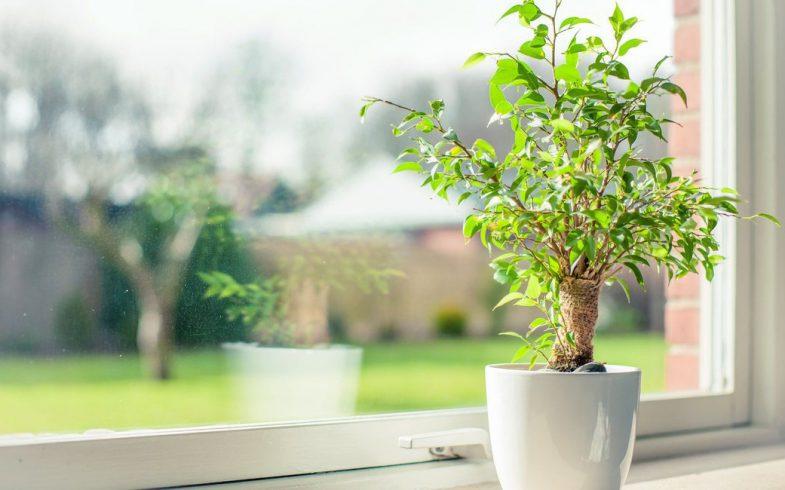 ¿Cuáles son las mejores plantas para tener dentro de casa?